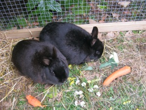 Rabbit food is popular, lettuce, parsley, broccoli leaf, hay and pellets