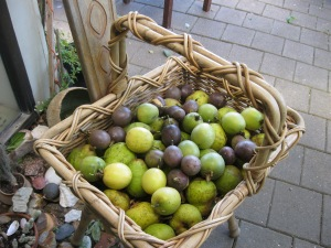 Scrounged windfall pears, purple and yellow passionfruit. The latter are better.