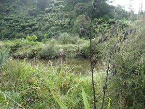 Blackened old flax seed heads beside the Matekerepu river