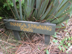 Inanga spawning pond sign reminds us to respect it